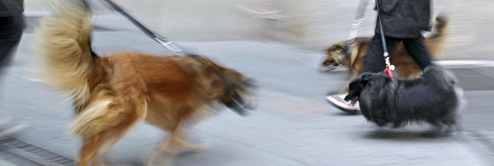 Koiran Kiinnipito
