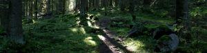 Aurinkoinen_metsä