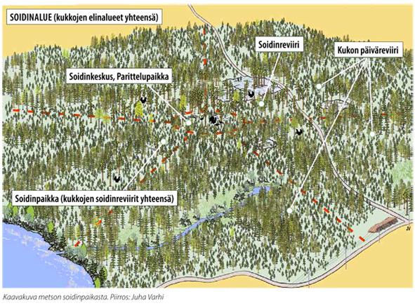 PDF Metsänhoidon suositukset riistametsänhoitoon, 2014