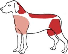 skadeomraden-hund