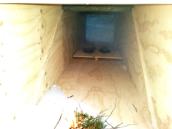 Värmlantilainen tunneliloukku