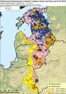 ASF Afrikkalaisen sikaruton levinneisyyskartta Puolassa ja Balttiassa
