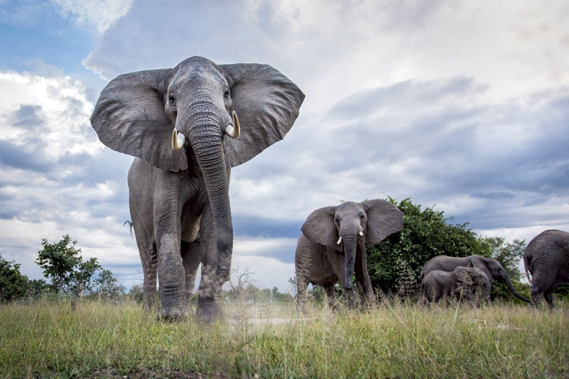 Will Burrard-Lucas elephants