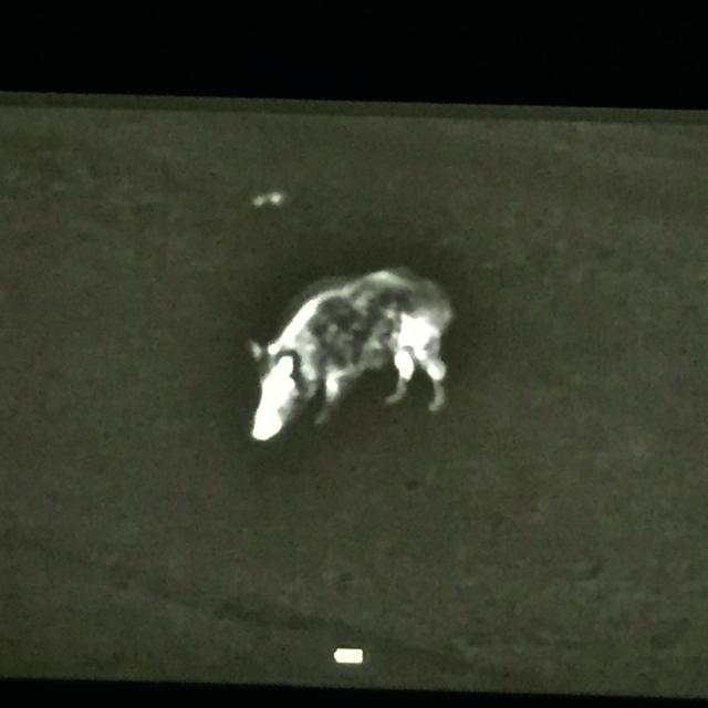 Nitehog TIR-M35 Nachtjagd - Nachtsicht vs. Wärmebild im Test