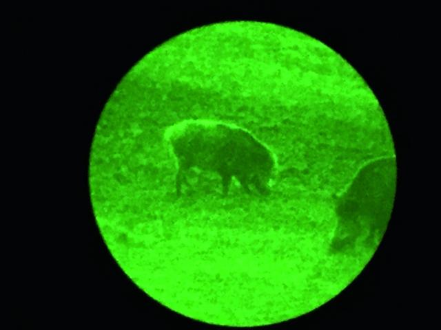 Nitehog NIR-M Nachtjagd - Nachtsicht vs. Wärmebild im Test