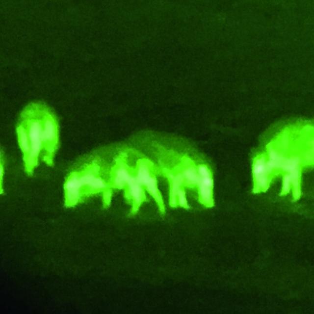 Pulsar Core FXD-50 Nachtjagd - Nachtsicht vs. Wärmebild im Test