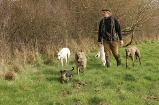 Lurchers with terriers