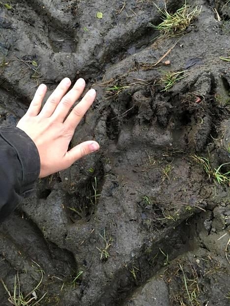 Ria kuvasi karhun tassun jäljen.