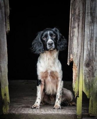 Andy Biggar dogs natural framing