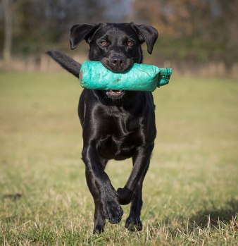 Andy Biggar dogs photographying black dogs
