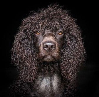 Andy Biggar dogs portraits
