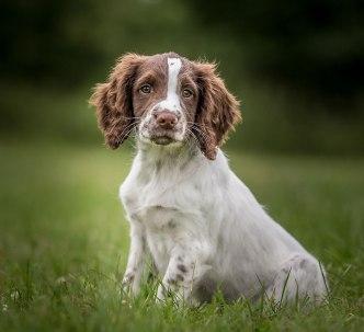 Andy Biggar dogs understanding subject
