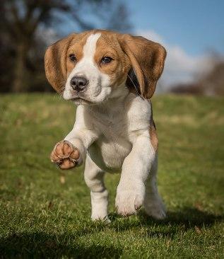 Andy Biggar Dogs use natural light