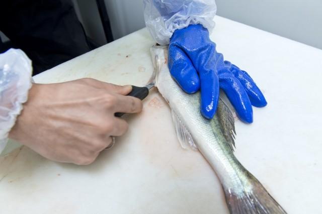 2. Vatsa avataan. Viilto tehdään perkauspuukolla kalan peräaukosta ja tuodaan rintalastaan asti. Siinä on kovempi kohta, johon täytyy käyttää vähän enemmän voimaa.