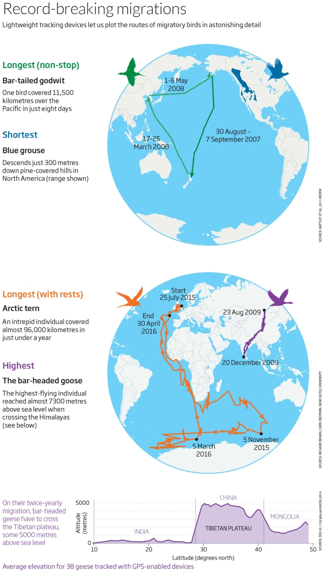 Record-breaking migrations