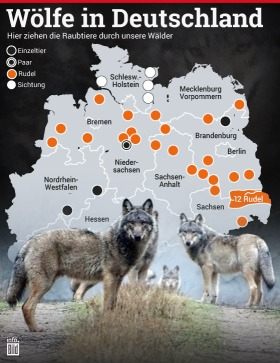 Wölfe in Deutschland