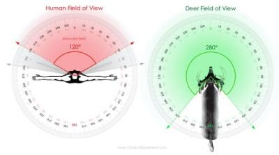 Figure 1-C. Human vs. Deer Field of View.