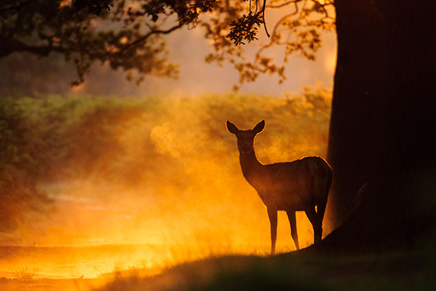 Lighting deer in mist