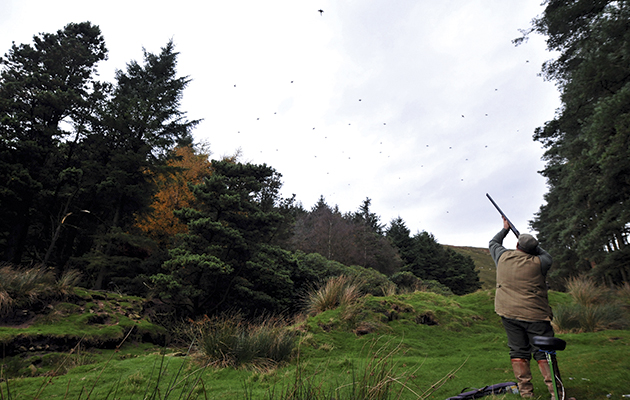 How to shoot pheasants. Side