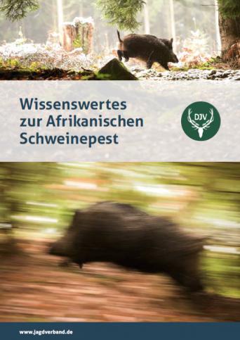 """Titelbild der Broschüre """"Wissenswertes zur Afrikanischen Schweinepest"""""""